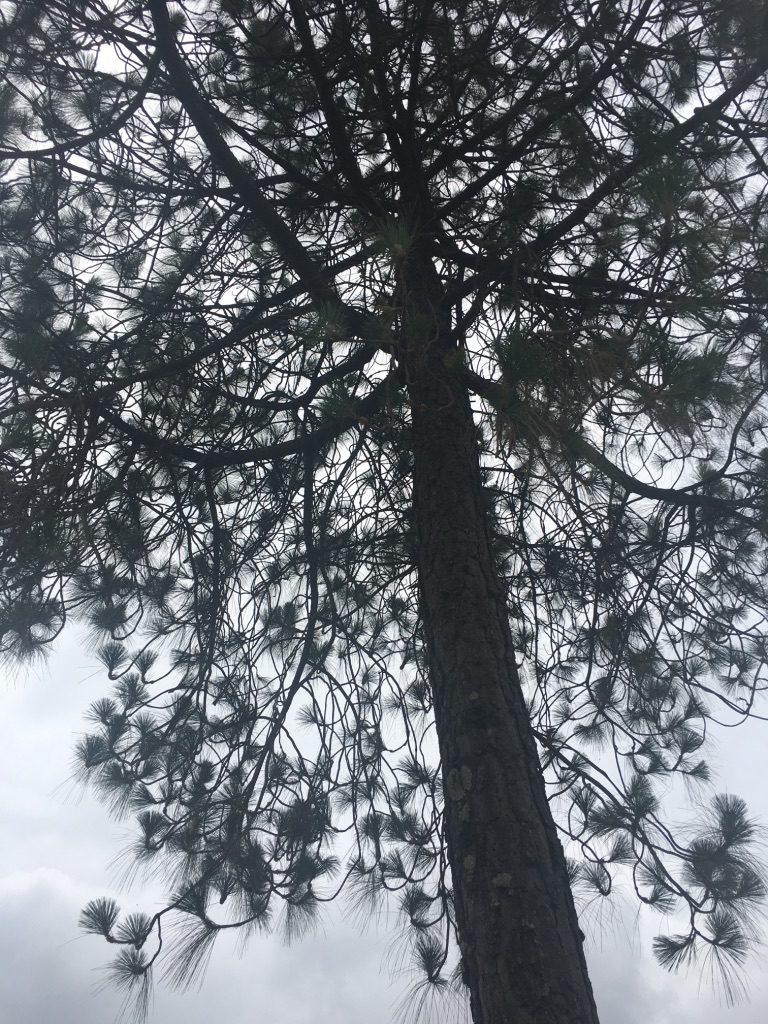 thursday-tree-love-12-main