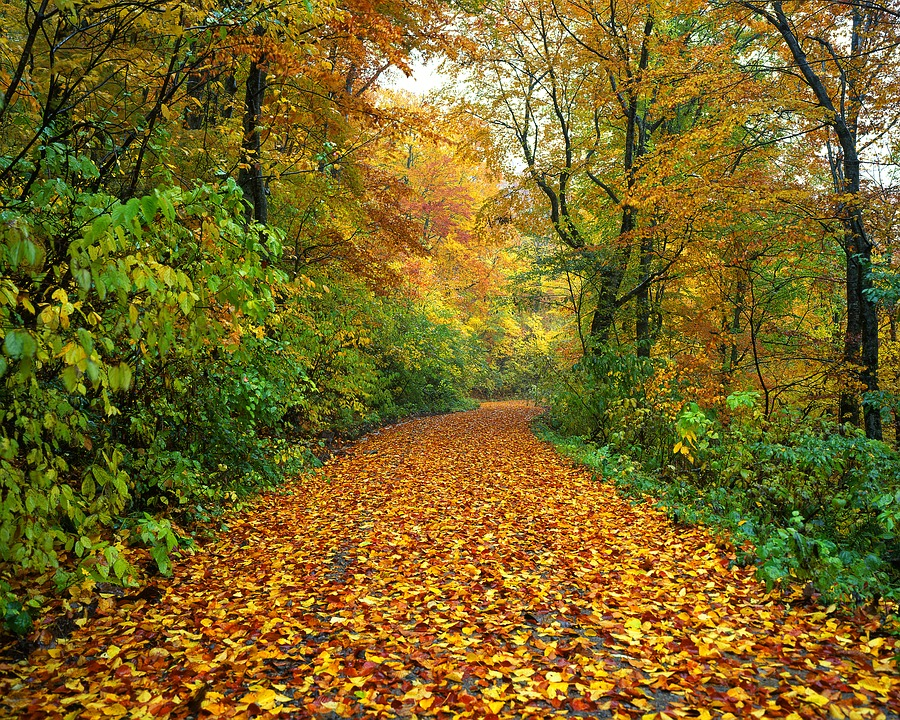 wanderlust-wednesday-journeys-of-life-road