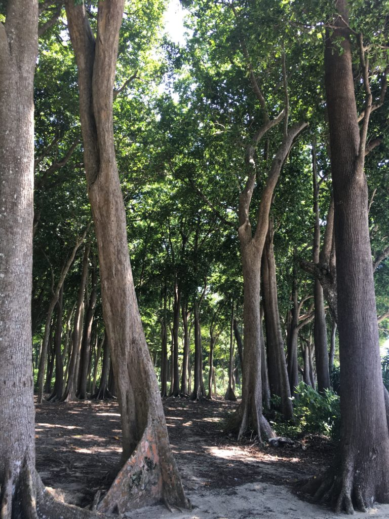 write-tribe-pro-blogger-write-bravely-monday-musings-beyond-your-fears-lies-fun-trees
