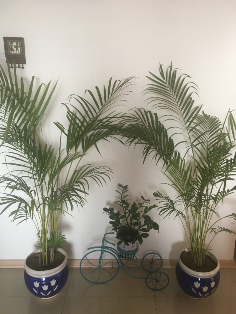 monday-musings-that-thing-about-winters-plants