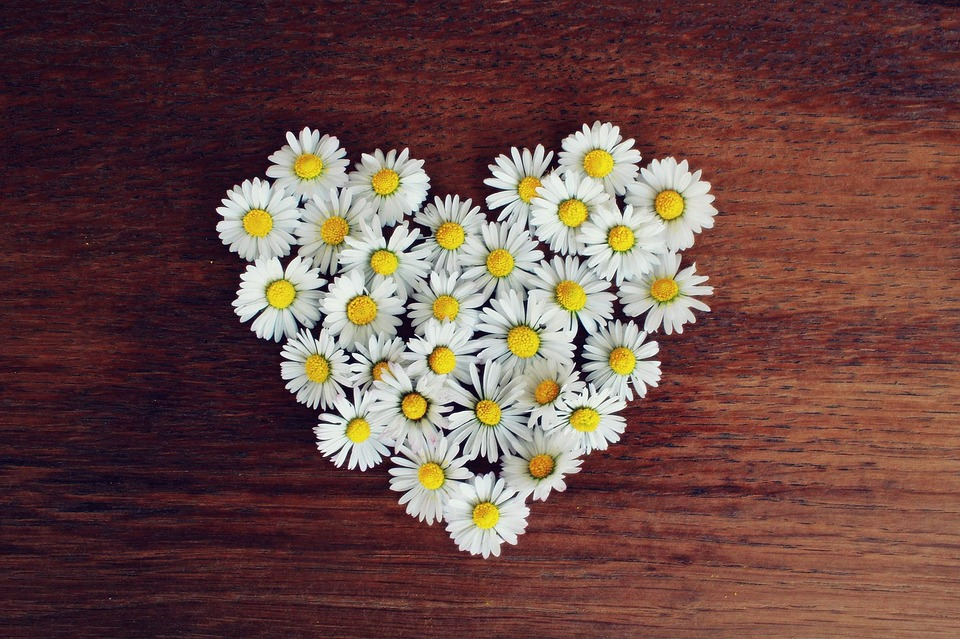wow-blogadda-monday-musings-to-live-with-gratitude-daisy