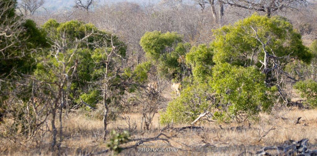 wanderlust-wednesday-adventures-at-kruger-trees