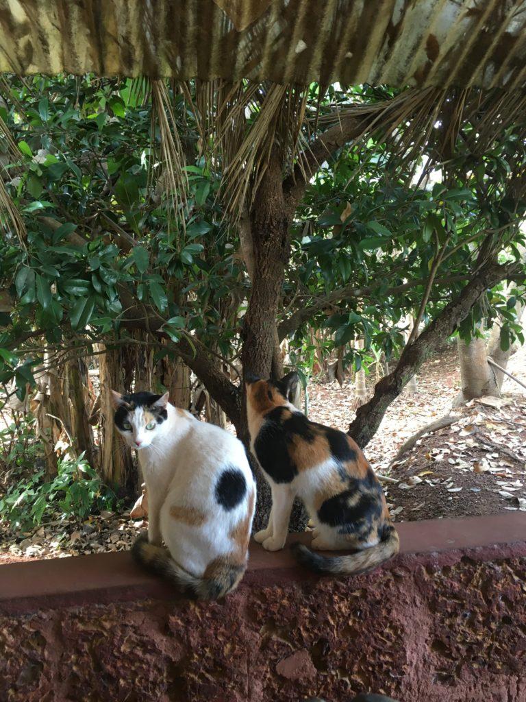 wanderlust-wednesday-dreamy-december-in-olaulim-backyards-cats