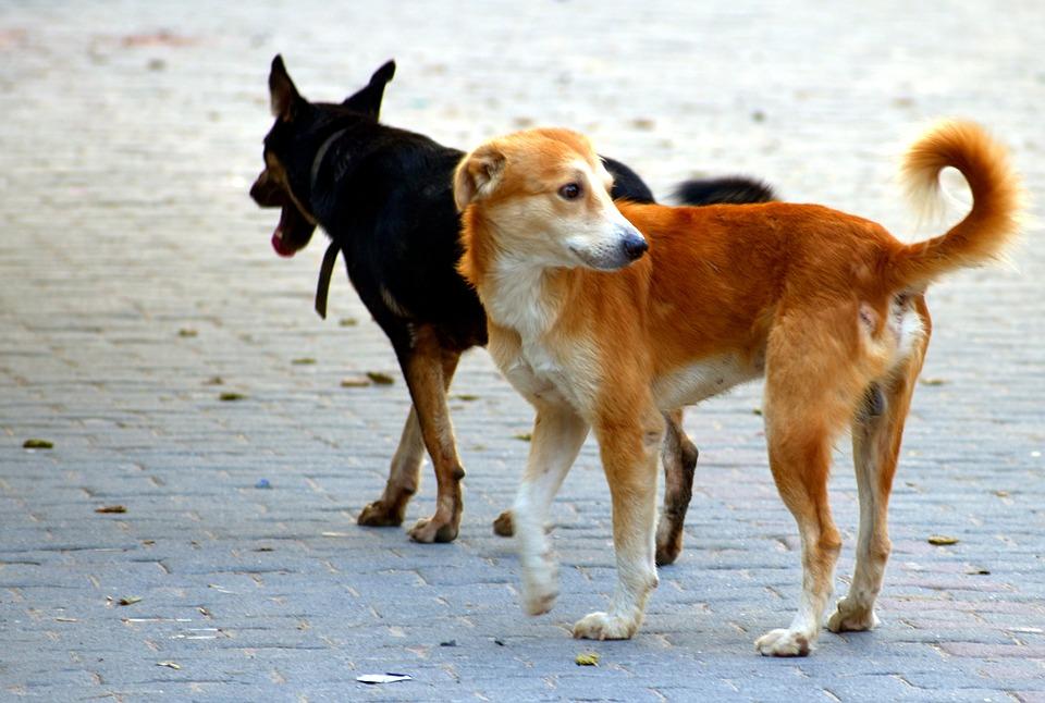 monday-musings-woty-nurturing-dogs