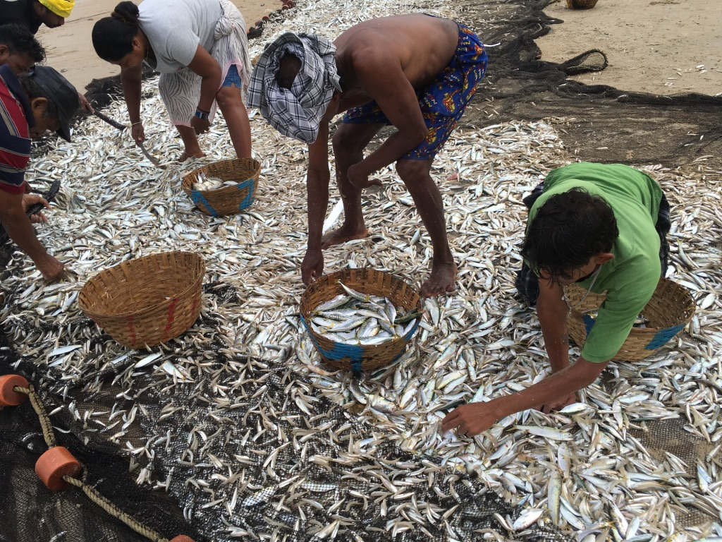 wordless-wednesday-the-prized-catch-fishermen