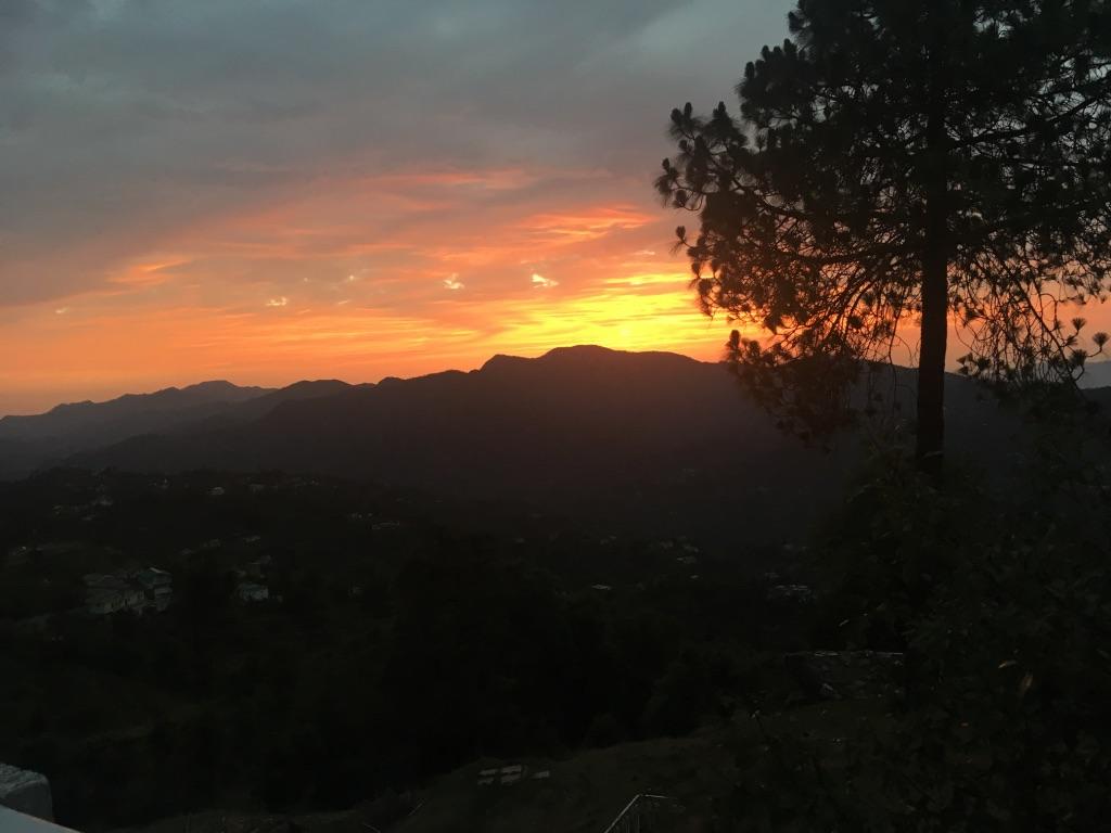 thursday-tree-love-natasha-musing-twilight-and-the-tree-twilight