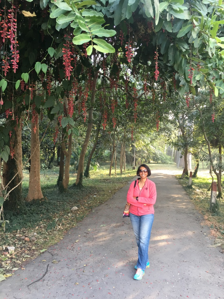 Thursday-tree-love-natasha-musing-in-love-with-the-canopy-of-reds-love