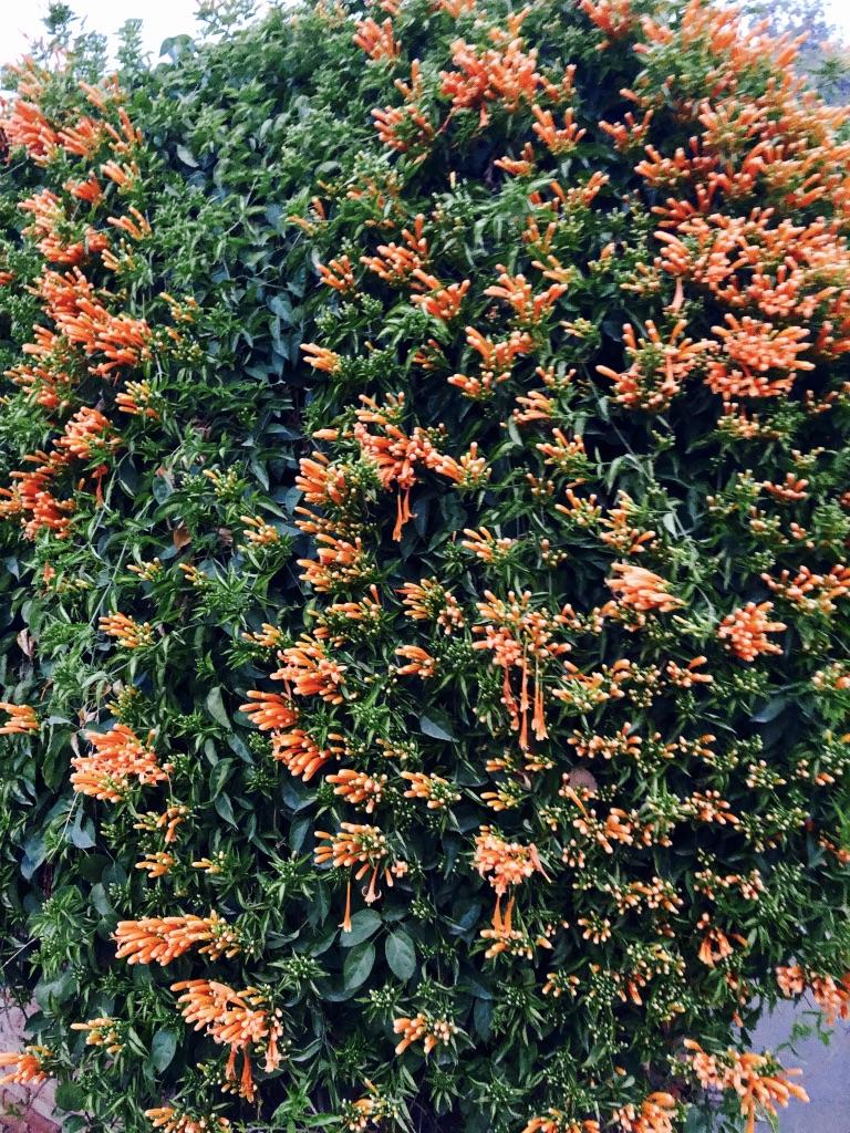 wordless-wednesday-natasha-musing-in-our-winter-wonderland-blooms