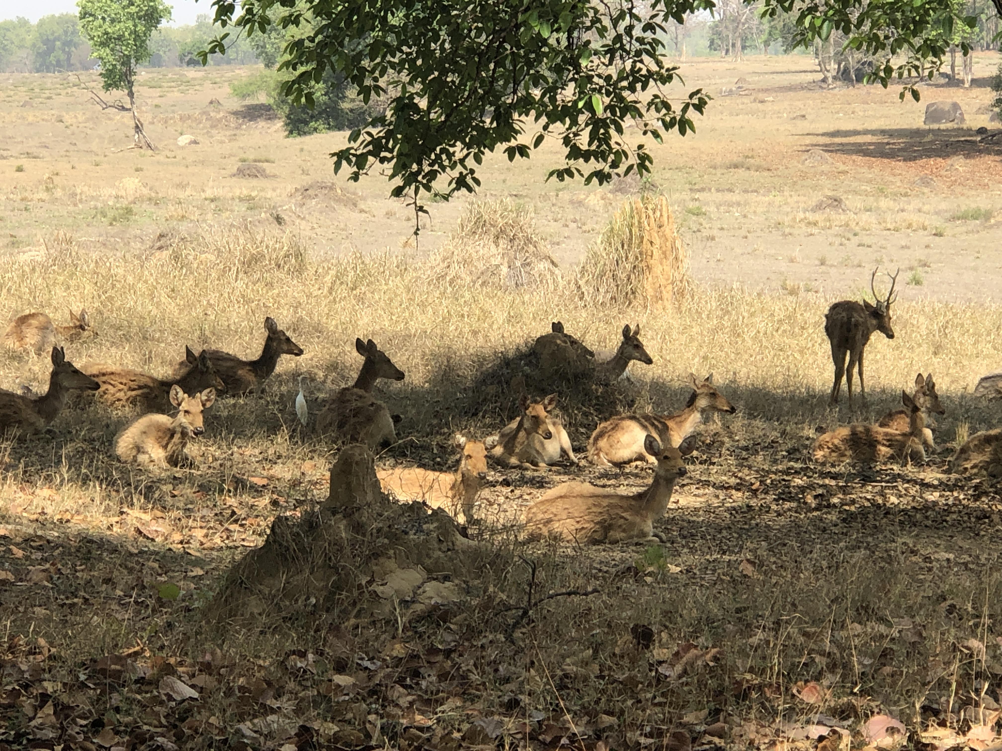 wordless-wednesday-natasha-musing-enchanted-forest-sambars