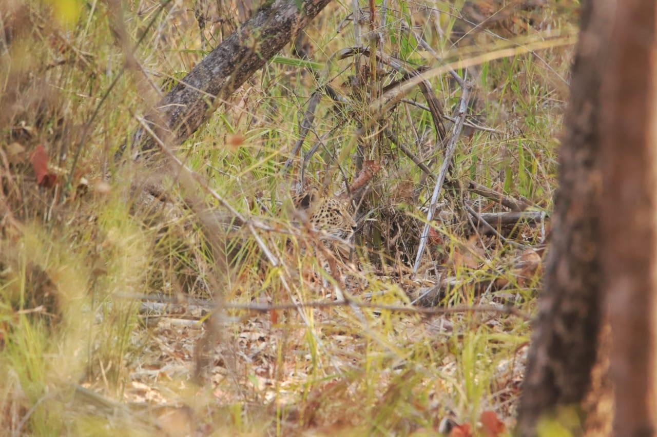wordless-wednesday-natasha-musing-laws-of-the-jungle-camouflage