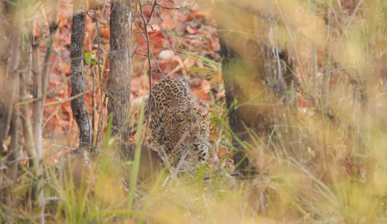 wordless-wednesday-natasha-musing-laws-of-the-jungle-leopard