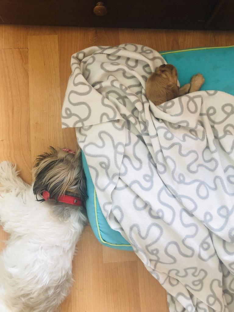 wordless-wednesday-natasha-musing-mishkas-mothers-day-homecoming-sleepingdogs