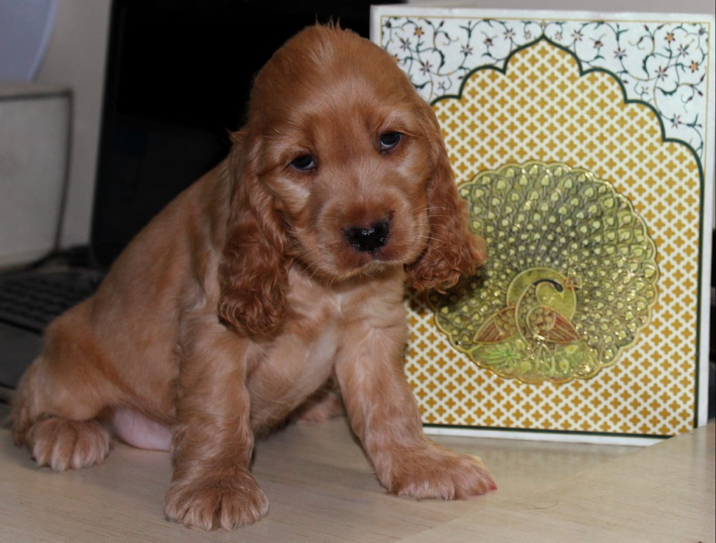 wordless-wednesday-natasha-musing-five-things-that-sparked-joy-recently-lcockerspanielpuppy