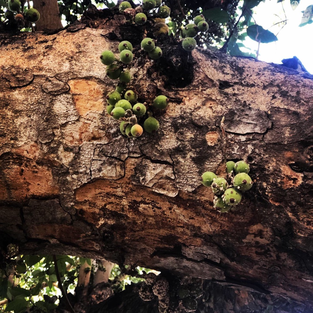 wordless-wednesday-natasha-musing-weekend-vibes-figs