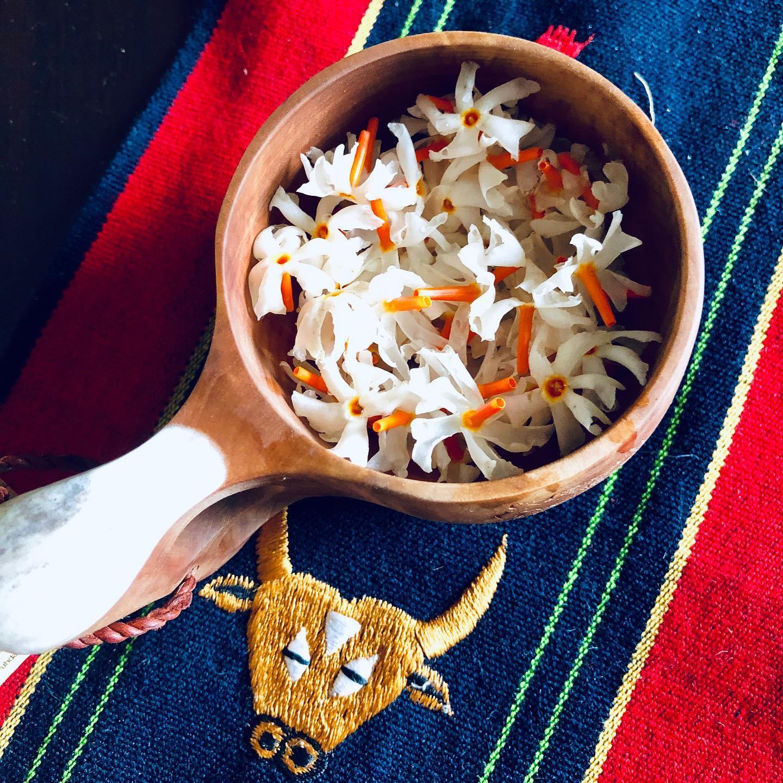 monday-musings-micro-mondays-monday-blogs-natasha-musing-the-autumn-visitors-night-jasmines-shiuli-nightjasmine