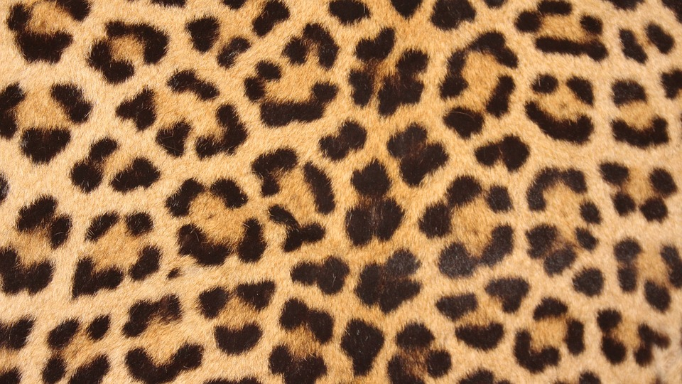 wordless-wednesday-natasha-musing-leopard-the-beauty-with-the-spots-leopardspots