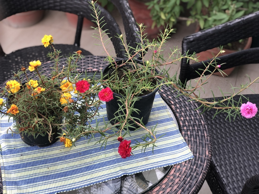 wordless-wednesday-natasha-musing-the-best-things-in-life-are-free-flowers