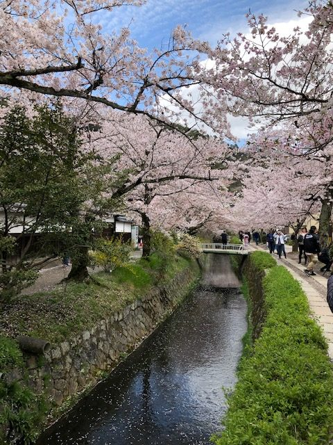 thursday-thoughts-natasha-musing-the-philosophers-path-a-walking-trail-in-kyoto-cherryblossoms