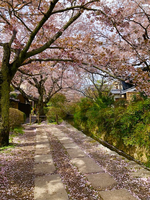 thursday-thoughts-natasha-musing-the-philosophers-path-a-walking-trail-in-koyoto-hanami