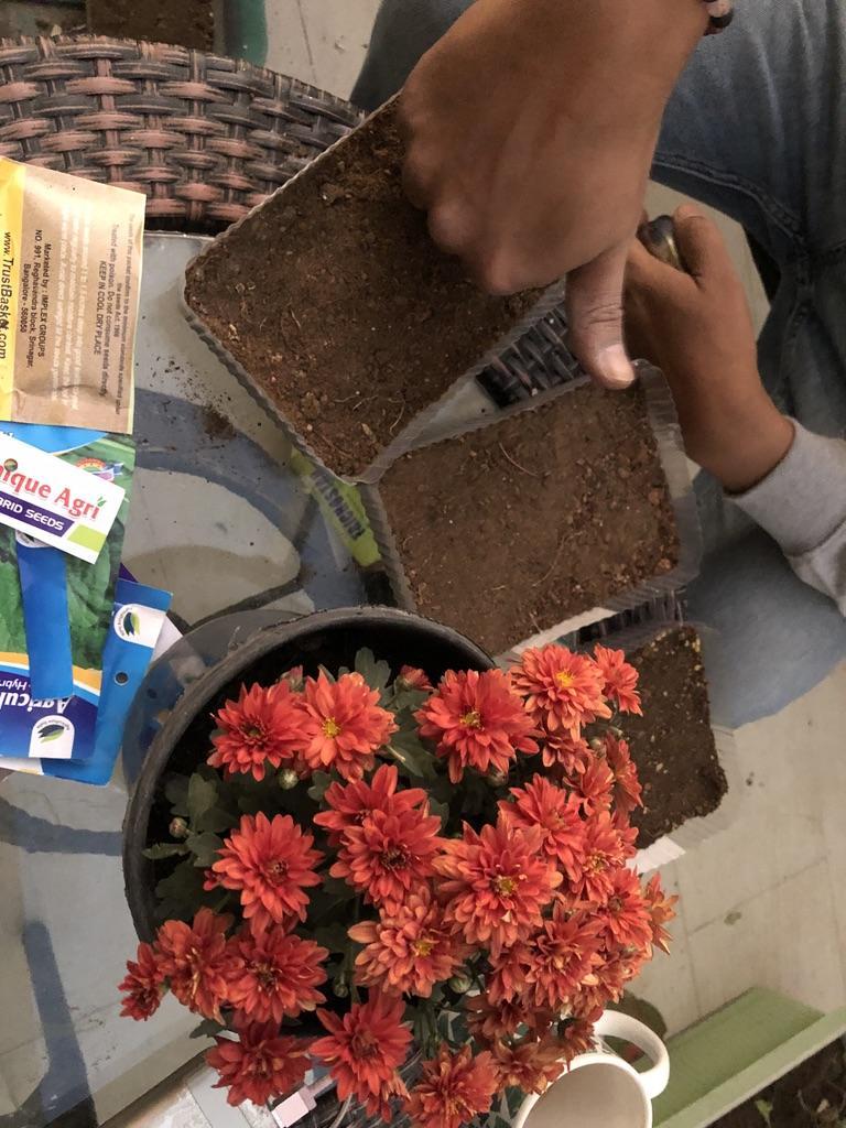 wordless-wednesday-natasha-musing-growing-microgreens-microgreens