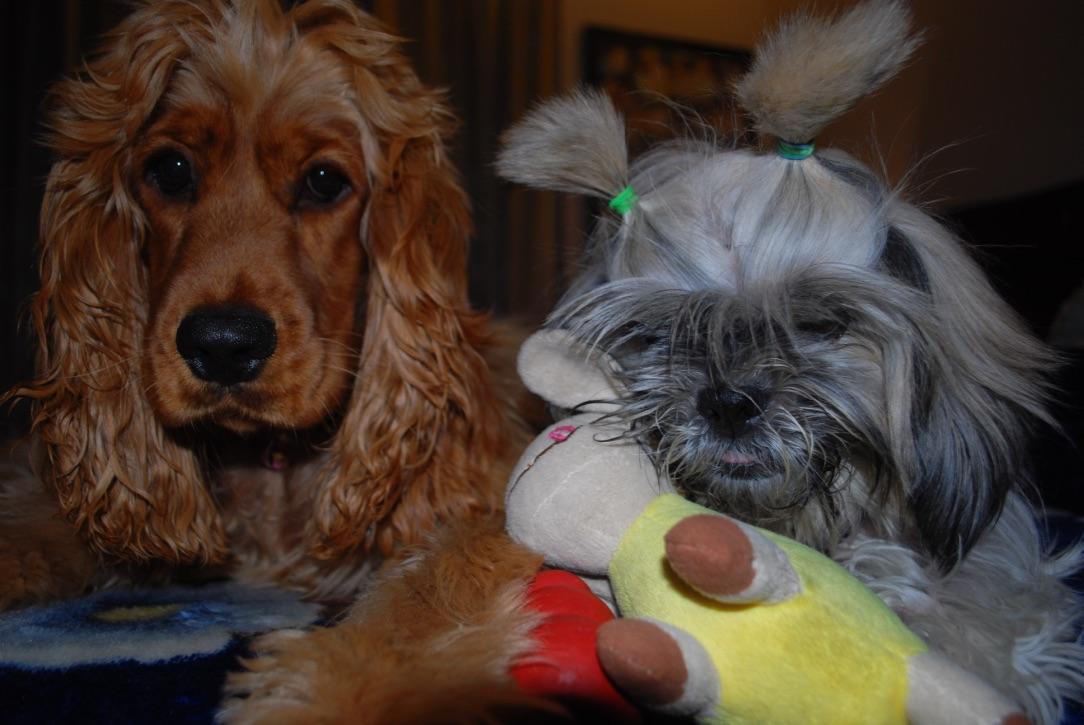 wordless-wednesday-natasha-musing-tender-love-dogs