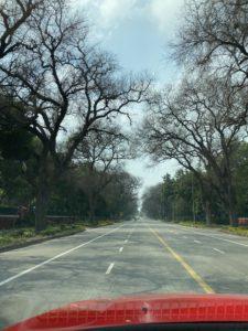 thursday-tree-love-natasha-musing-be-like-a-tree-tree