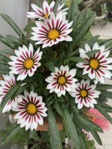 wordless-wednesday-natasha-musing-love-in-the-time-of-corona-part-2-flowers