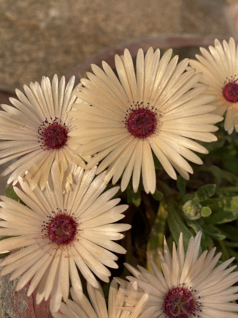 wordless-wednesday-natasha-musing-wednesday-wisdom-dlowers-our-constant-friends-flowers