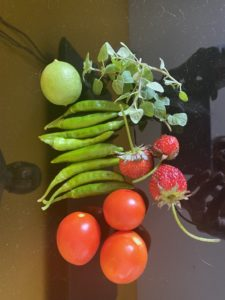 wordless-wednesday-natasha-musing-farm-to-table-vegetables
