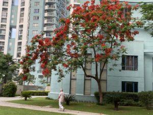 wordless-wednesday-natasha-musing-speeches-with-the-skies-trees-walk