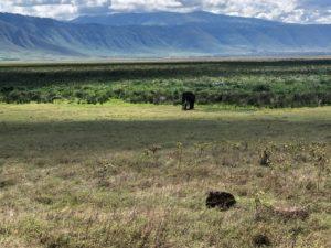 wordless-wednesday-natasha-musing-african-elephants-wild-africa-african-adventures-elephant-ngorongoro