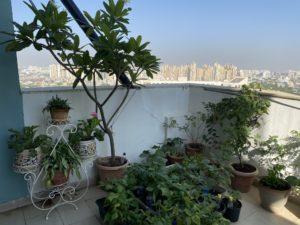 Thursday-tree-love-natasha-musing-garden-love-plants in pots