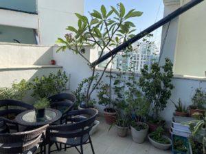Thursday-tree-love-natasha-musing-garden-love-plants in pots garden chairs