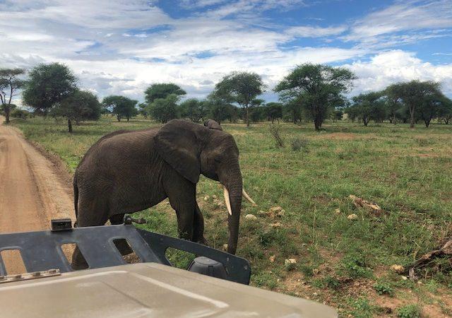 wordless-wednesday-natasha-musing-african-elephants-wild-africa-african-adventures-elephant