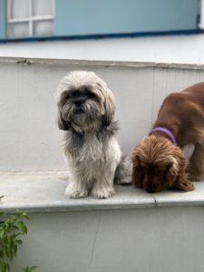 wordless-wednesday-natasha-musing-mishka-laila-tails-dogs