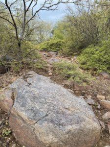 Rock in the Aravalli hills amidst flora