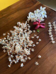 Night Jasmines- Frangipani