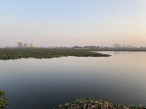 Wetlands - Waterplants and horizon