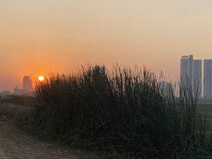 Sunset- Tall Grasses