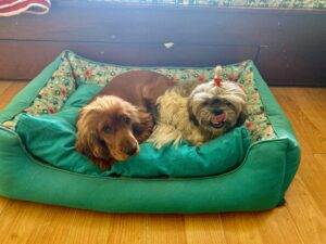 Dogs-Dog bed