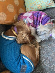 Dogs-Cuddles