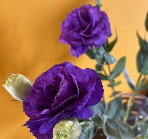 Eustoma - flowers and buds
