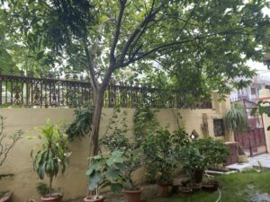 Garden - Gauva tree- Garden