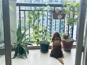 Balcony with Plants - Dog looking out