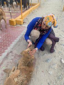 Lady loving- mountain dog-Patthar Sahib