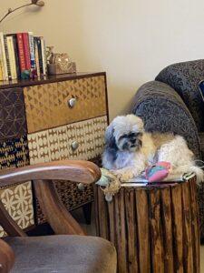 Dog-Book case-Books